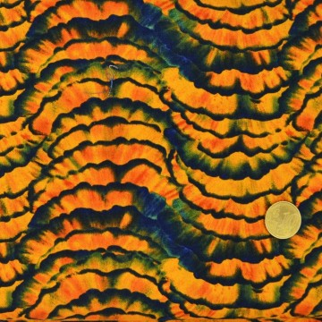 Tissu  Tailles de crayon Blank